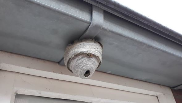 small wasp nest above window the wasp specialist